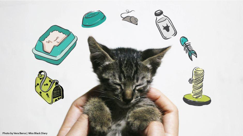 Kenapa Kucing Mencret Padahal Makanannya Tetap Produk Yang Sama