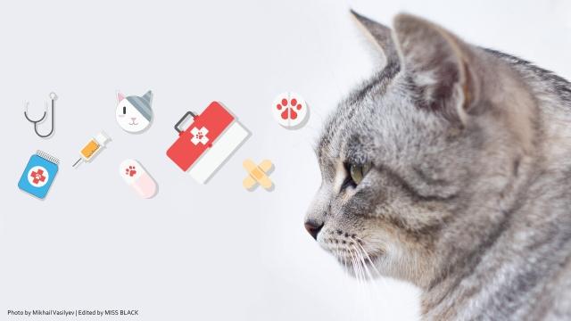Pertolongan Pertama Pada Kucing Sakit Yang Lemas Buku Harian Si Kucing Hitam